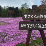 滝上の芝桜まつり2019開花状況や見頃おすすめ楽しみ方は?