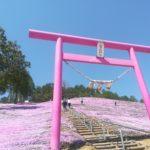 東藻琴の芝桜公園2019見頃や開花状況おすすめは遊覧車?