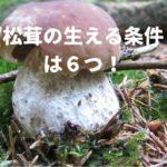 松茸の生える条件は6つ!「赤松の密集」が一番重要な条件?