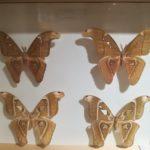 当麻の世界昆虫館パピヨンシャトー「ヘラクレス」は迫力満点!